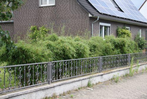 Bambus Pflanzenshop Bambushecken Ohne Auslaufer Sichtschutz Mit Bambus Kaufen